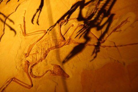 Evangelisdae Raptoridae - Extinct dinosaur evangelist